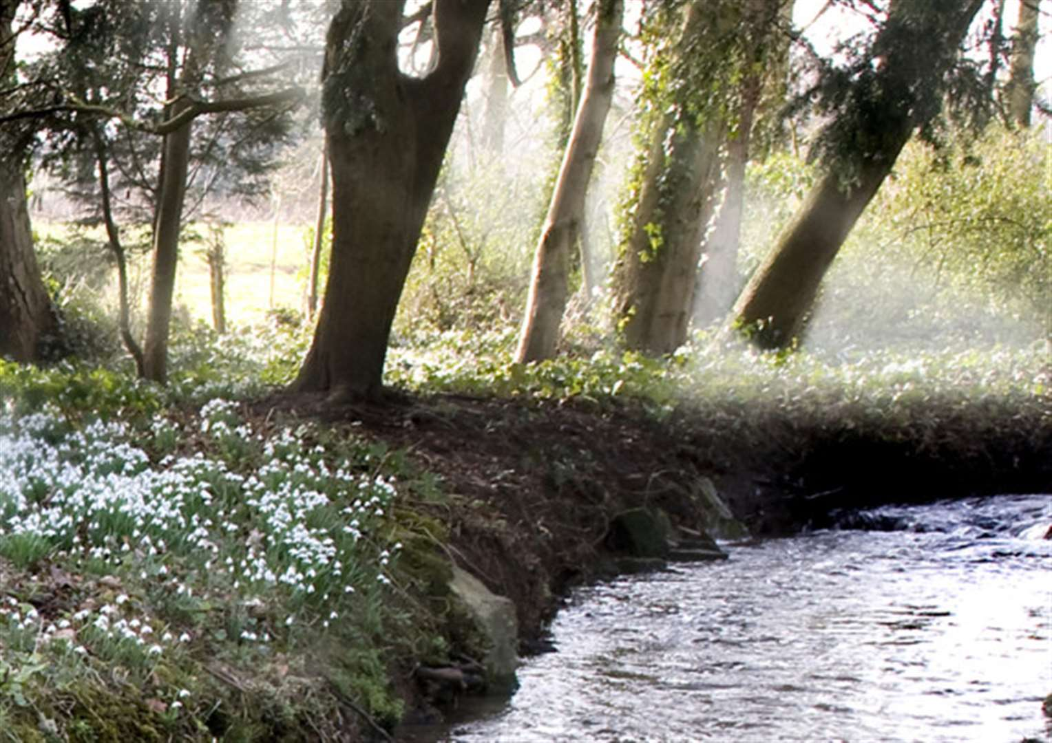 Visitors can enjoy snowdrop spectaculars at Little Ponton and Easton
