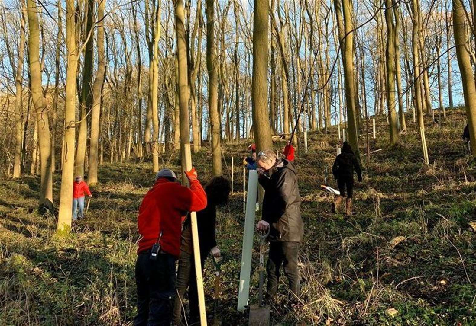 Volunteers plant 150 trees to reconnect Grantham woodland