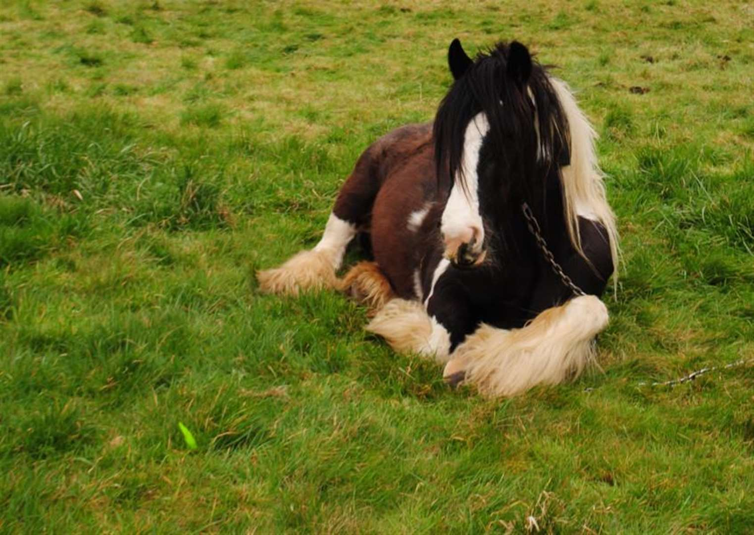 Bailiff called in as horses are left in Grantham firm's field