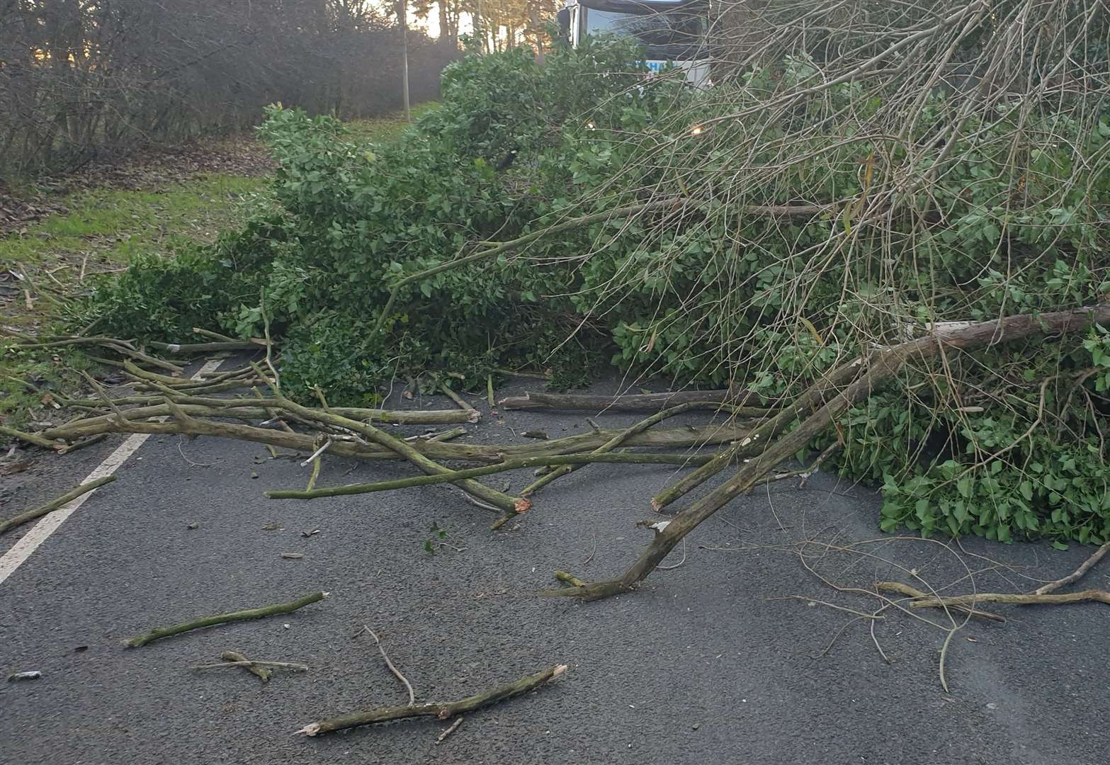Lucky escape for motorist as tree falls across Grantham road