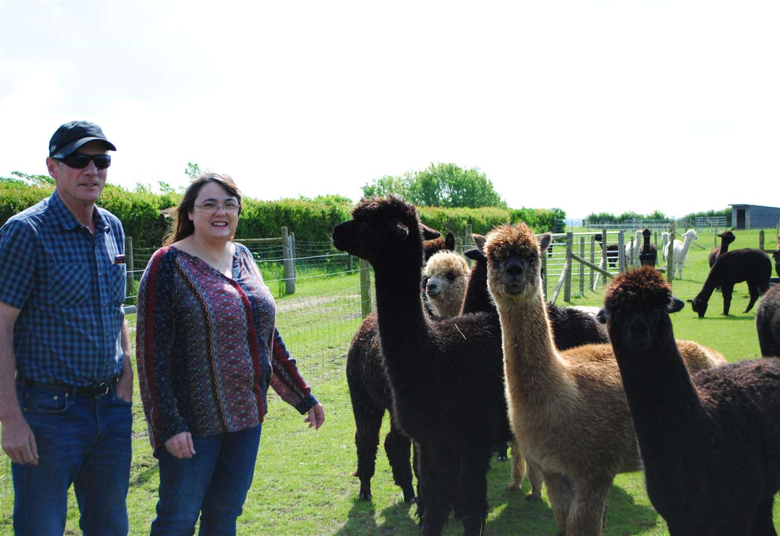 Alpaca tourism venture receives approval and plans to open by Xmas