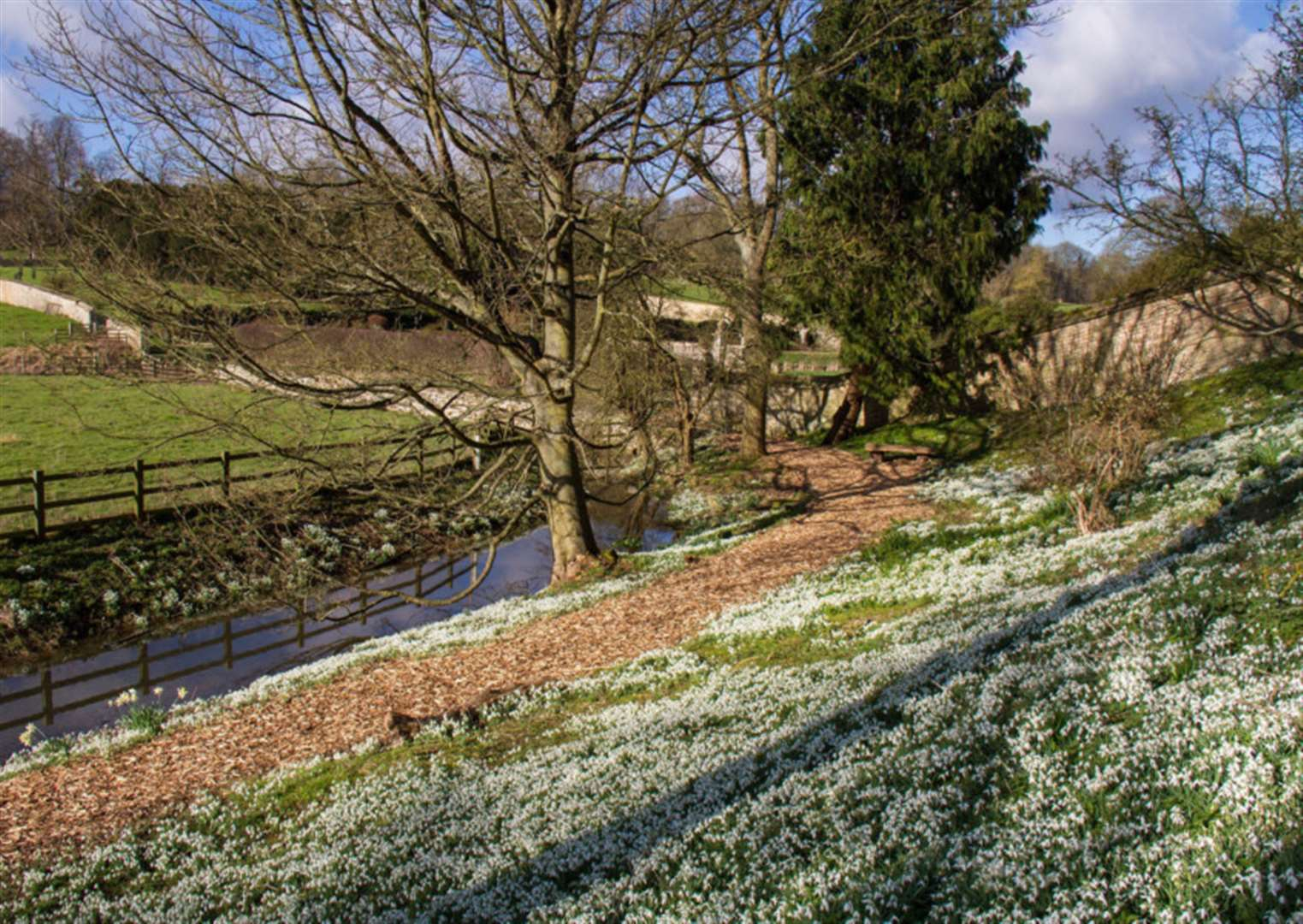 WHAT'S ON: Snowdrop Week begins at Easton Walled Gardens