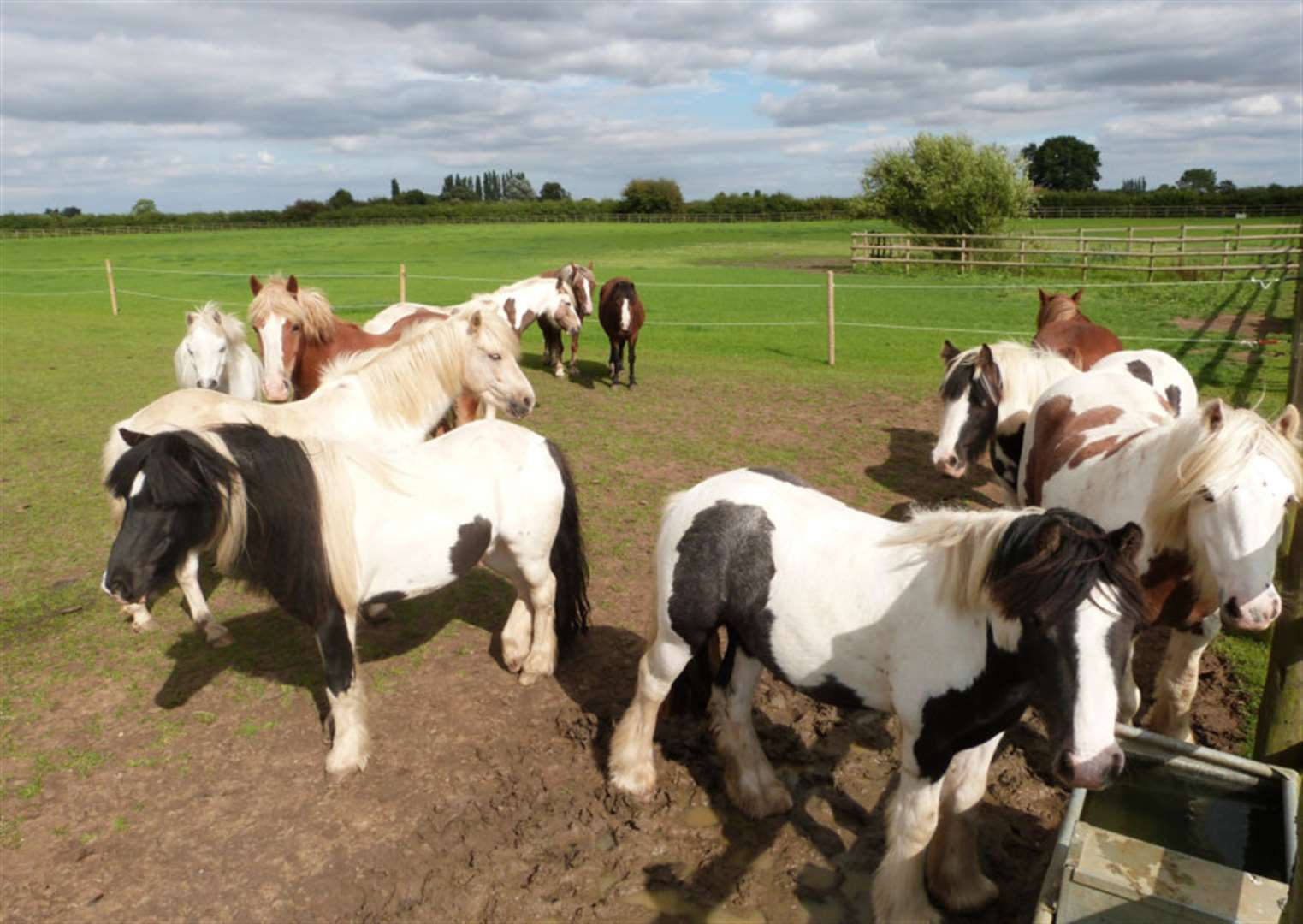 WHAT'S ON: Enjoy a free family day out with Bransby rescue horses