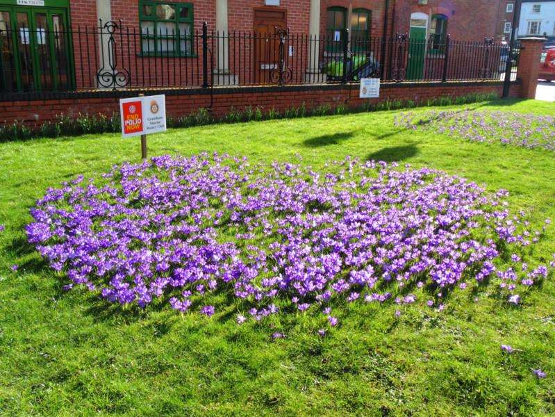 Flowers planted by the Grantham Sunrise Rotary Club.