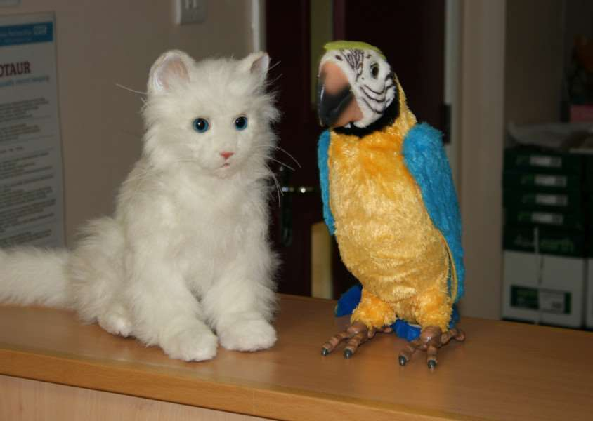 A robotic cat and parrot have improved the lives of dementia patients at the Manthorpe Centre in Grantham.
