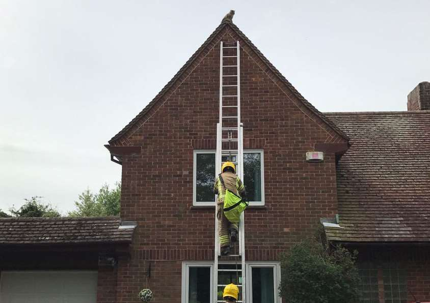 Grantham Fire Crew Rescue Pepsi The Cat From Roof