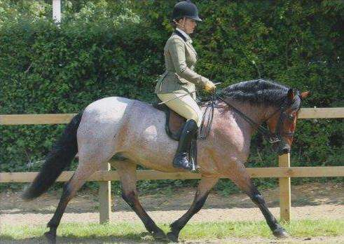 Abigail and Harvey competing at the Royal International Horse Show at Hickstead in July.