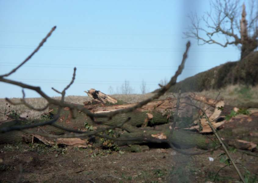 Trees cut down near Longcliffe Road, Grantham, in November, on land targeted by Larkfleet for 550 homes..
