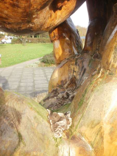 Fungal growth was found on the sculpture in Wyndham Park sensory garden. EMN-160403-112640001