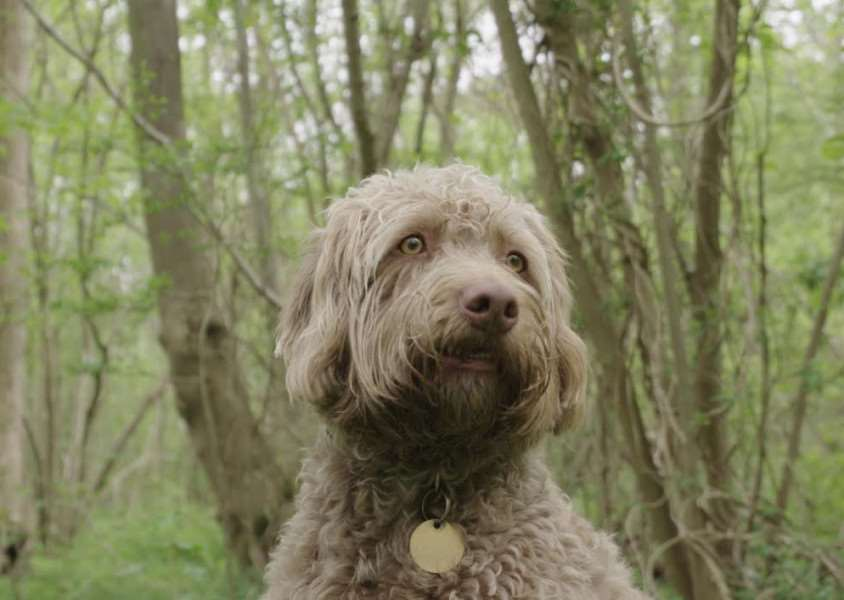 Grantham dog Jess is star of a Woodland Trust campaign. Photo: Philip Formby