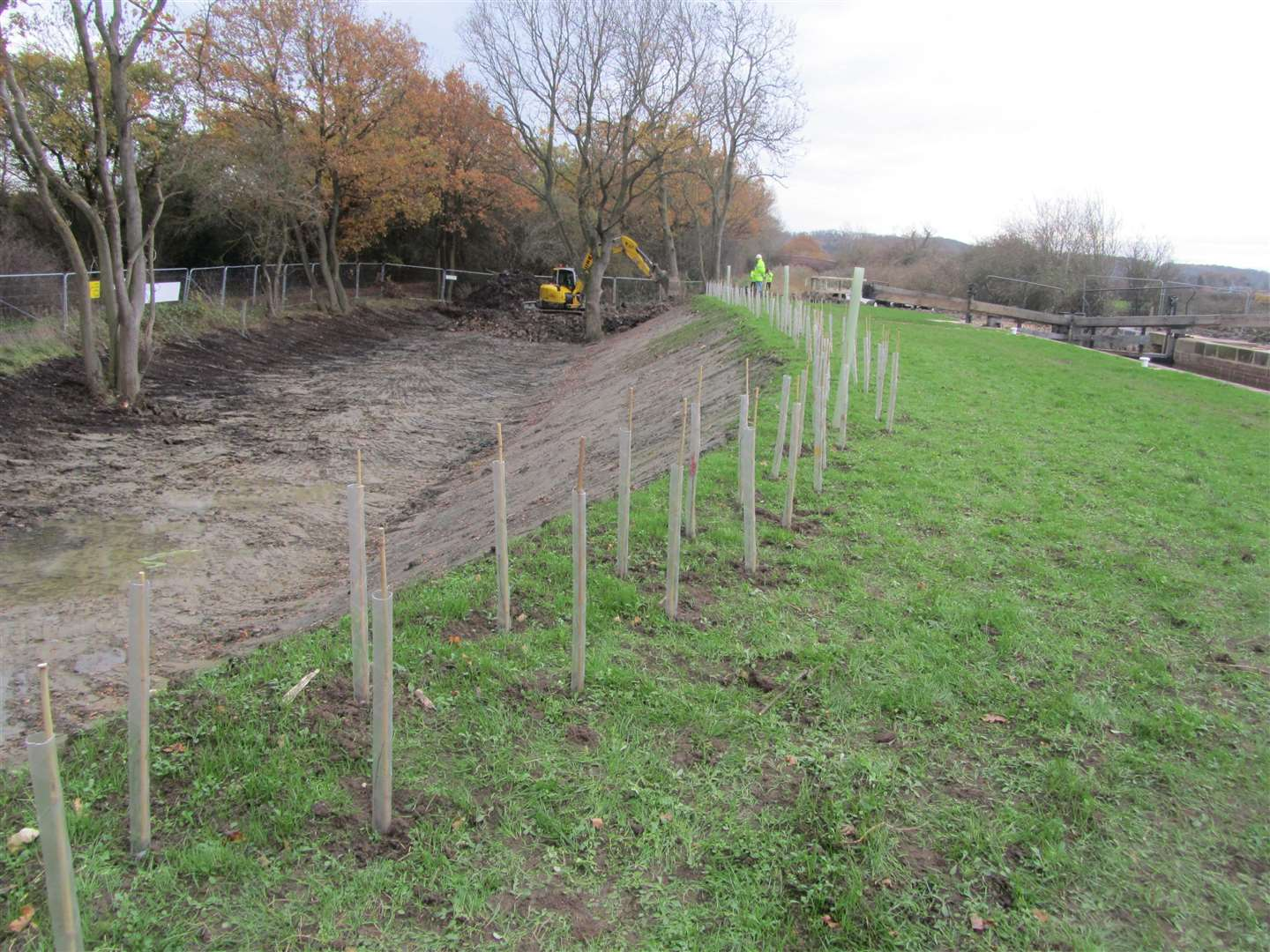 Trees have been planted alongside Lock 14. (43214748)