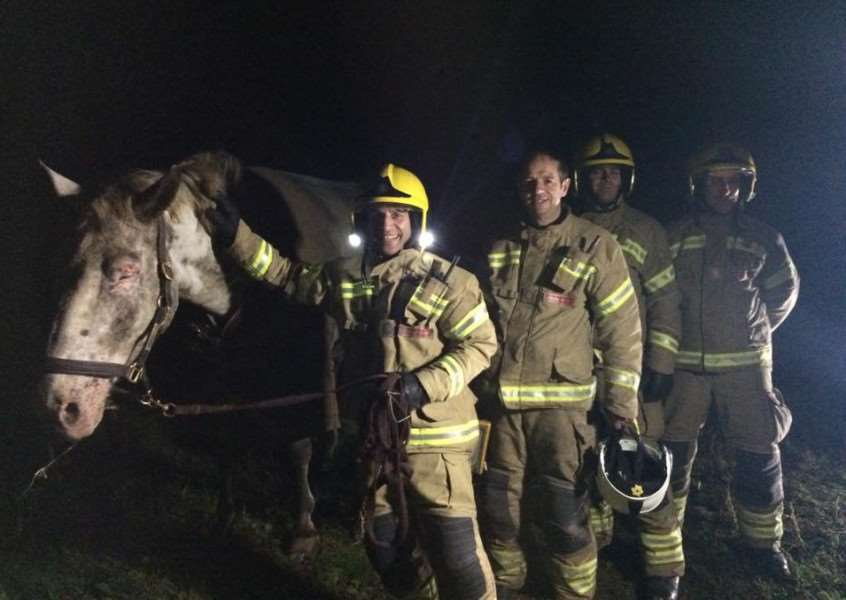Firefighters rescued this horse from a ditch in Barrowby.
