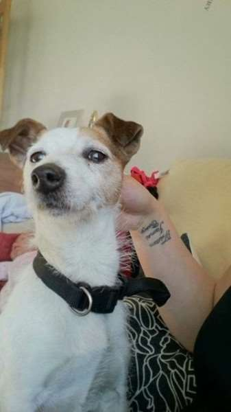 Jack Russell found in Long Bennington.