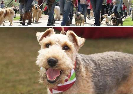 Walk your dog for charity at Belvoir Castle.
