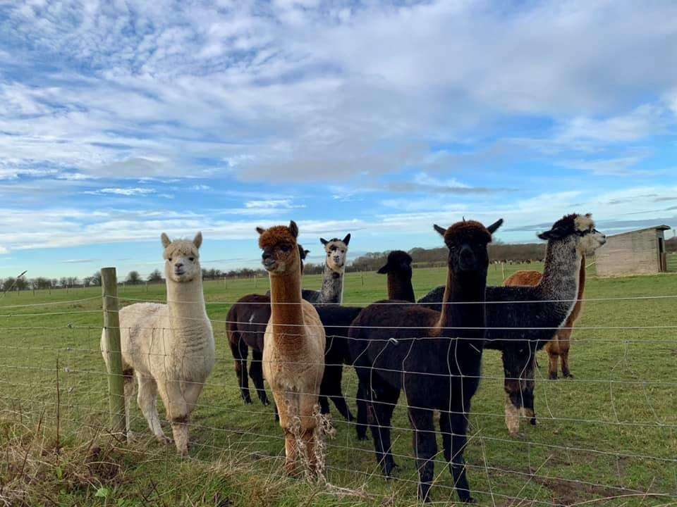 Martin and Clare Stanger opened the alpaca education centre last month. (6330491)
