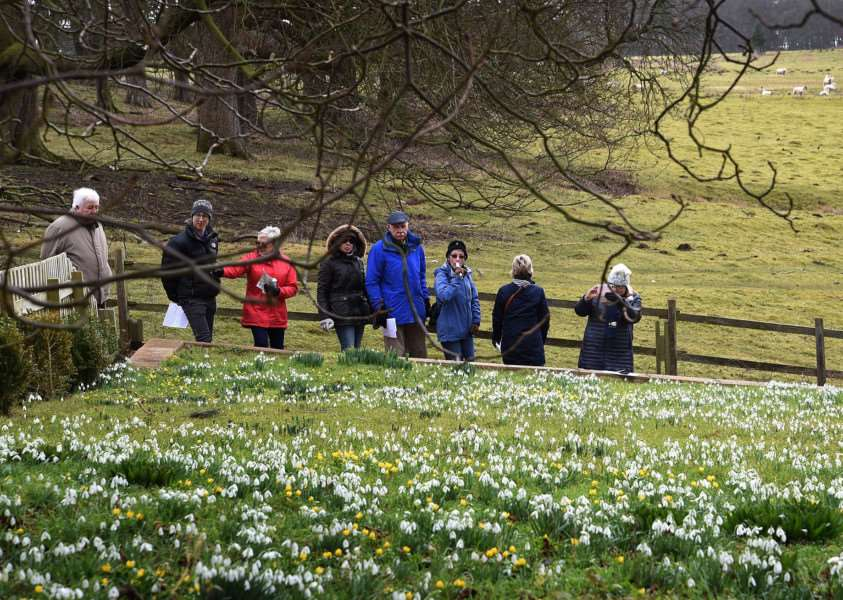 Visitors to Easton Walled Gardens admire the snowdrops.