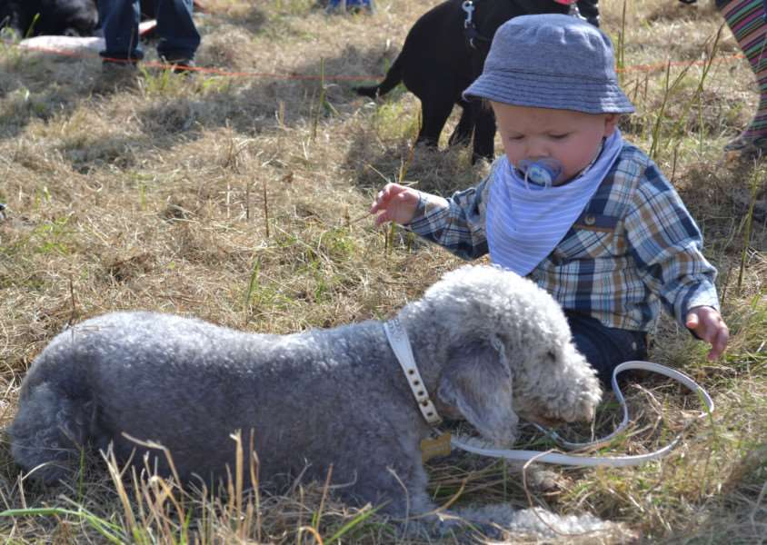 Among the competition categories were child's best friend. Photos by Philip Formby.