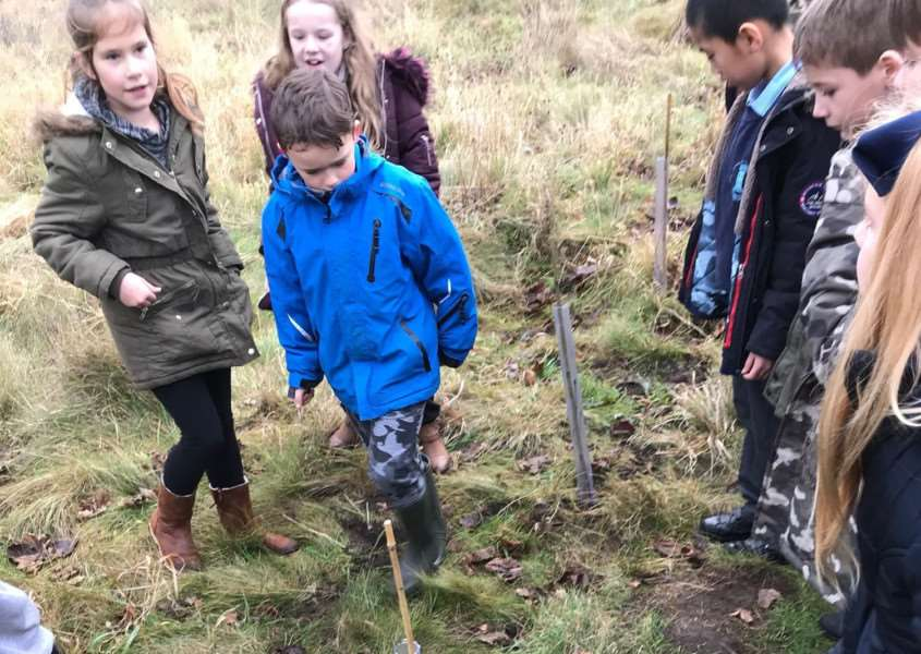 The Year 4 pupils planted the trees last Friday.