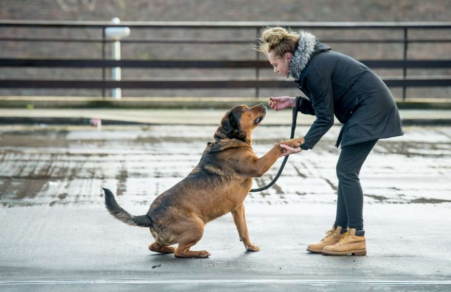 Jodie Dellow is reunited with Chance. Photo: Darren Cool - www.dcoolimages.com