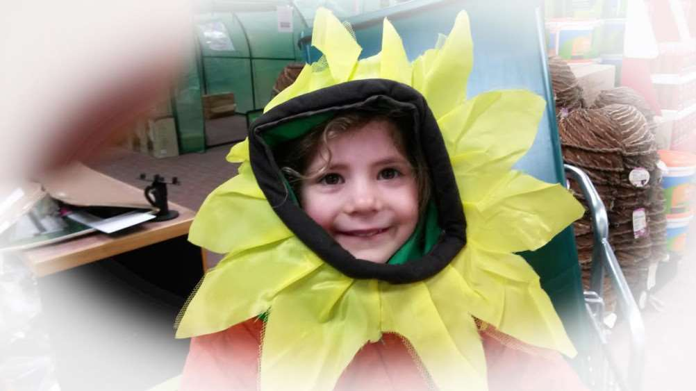 An enthusiastic little Sunflower.