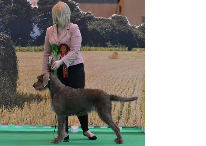Jenny Chevalier with her award-winning Slovakian rough haired pointer Nora, or Stormdancer Coral.