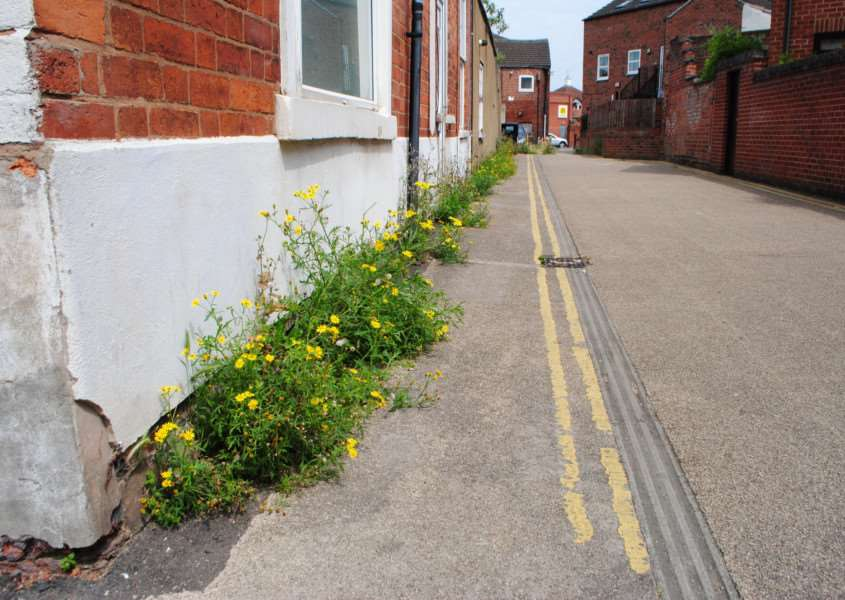 Weeds on Railway Terrace, Grantham.