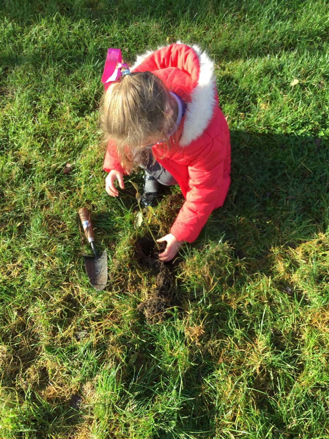 Pupils at Poplar Farm have been planting trees for Woodland Trust.(43155827)