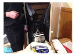 Police were assisted by expertly trained springer spaniel Charlie, who has a strong nose for tobacco.