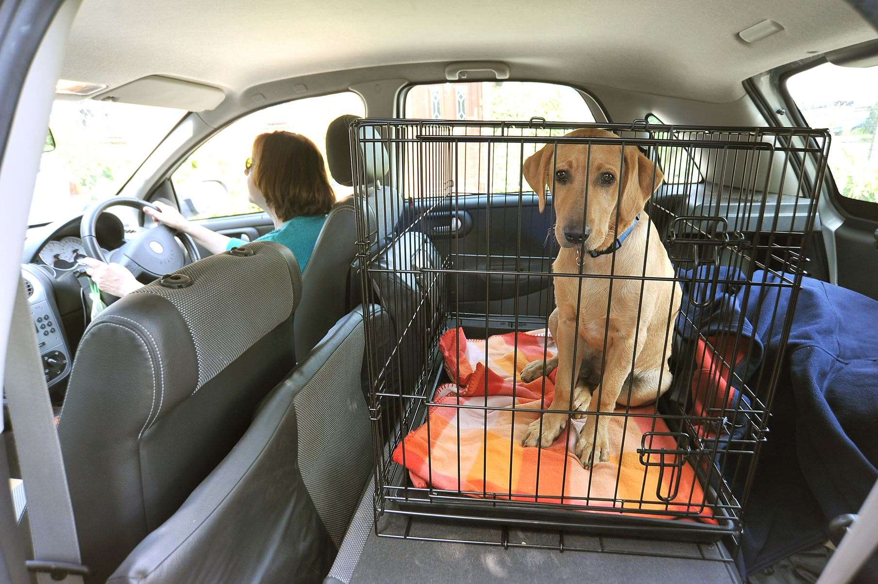 Drivers are advised to invest in either a good quality harness, crate or guard to keep a pet safe during journeys.