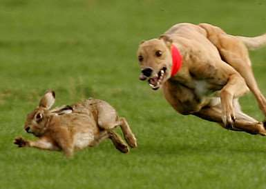 Hare coursing ANL-160401-095543001 ANL-160401-095543001