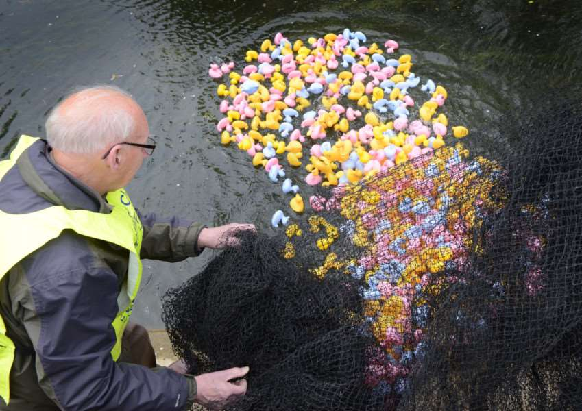 The Grantham and Kesteven Rotary Duck Race on the River Witham in Wyndham Park.