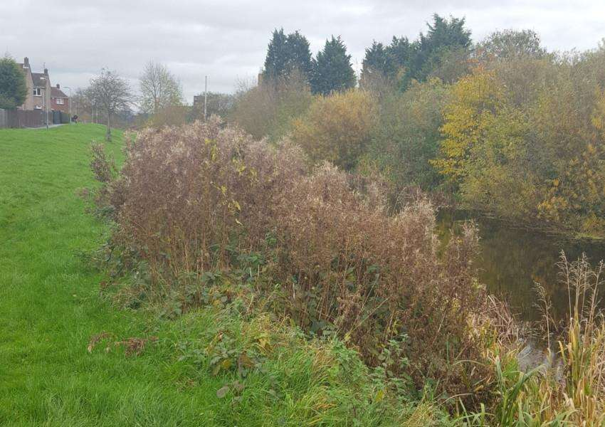 The overgrown bank of Grantham Canal between Trent Road and Swingbridge Road.