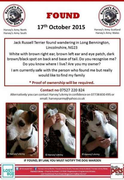 Jack Russell found poster.