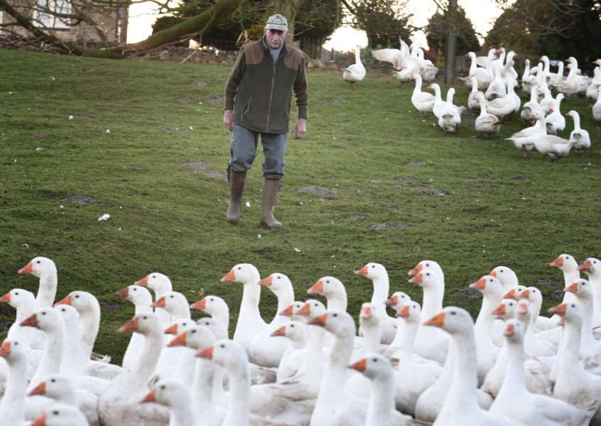 Gerald Botterill with his geese in Croxton Kerrial.
