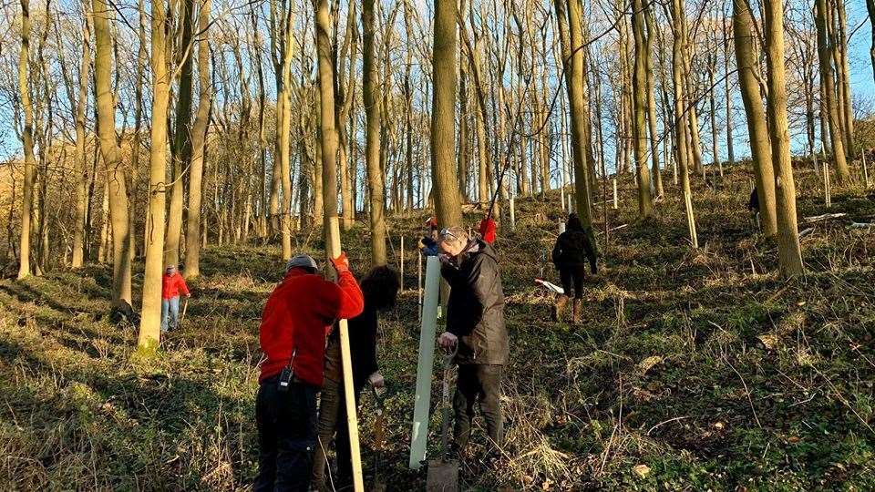 Volunteers planted 150 trees as part of project to reconnect woodland. (23530756)