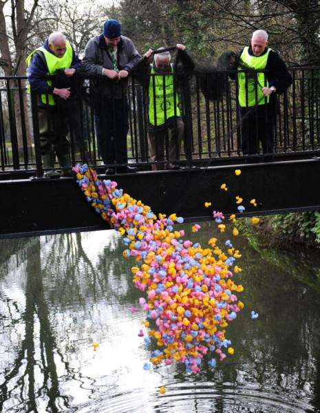 The ducks are released for Grantham Kesteven Rotary Club's annual Duck Race.